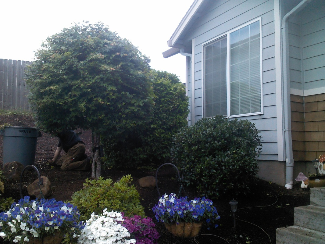 Korita 39 s landscaping maintenance home for Home garden maintenance